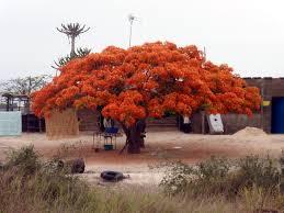 https://www.kimamori.fr/wp-content/uploads/2014/12/Angola.jpeg
