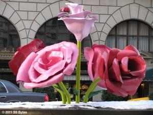 SS Bytes roses
